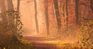 Joggering im Wald