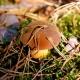 Steinpilz auf Waldboden. Copyright: _Alicja_. Pixabay #3747254